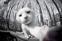 cat-selfie